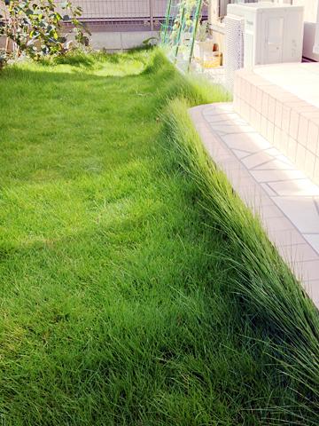 伸び放題の芝生