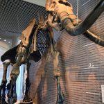 博物館シンボルのマンモス