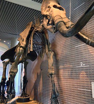 「ミュージアムパーク 茨城県自然博物館」に行ってきた。