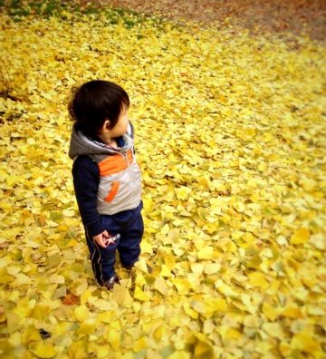 「流山市総合運動公園」で紅葉散歩。