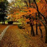 紅葉の流山総合公園