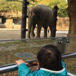 上野動物園で象さんを見る