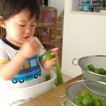 梅シロップ造りをお手伝い