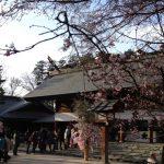 櫻木神社初詣