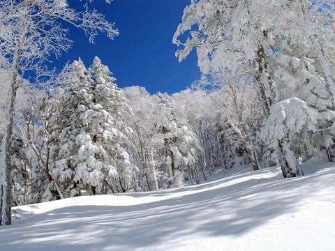 私をスキーに連れてって!流山おおたかの森東口からゲレンデ直行便。