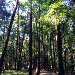 手賀の丘公園の緑