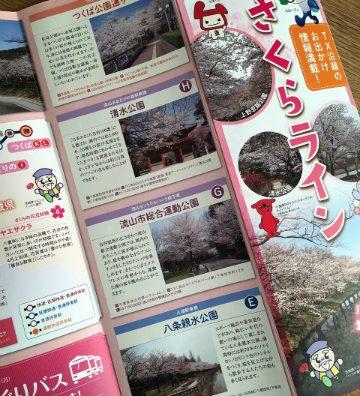 春だ花見だ!流山市付近「さくら祭り」まとめ2015年。