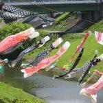 利根運河に泳ぐこいのぼり