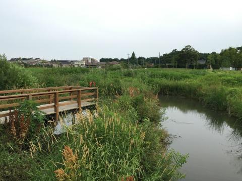 流山おおたかの森の「大堀川水辺公園」がいい感じでした。
