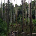 市野谷の森