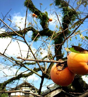 秋の大収穫祭を堪能。子供達も大喜び。