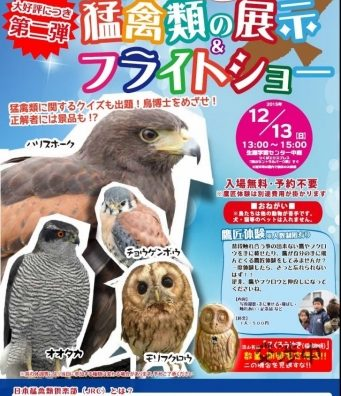 流山市生涯学習センターにて「猛禽類の展示&フライトショー」開催。