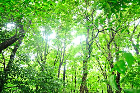 綺麗な森を守ろう。「市野谷の森お手入れ」が開催されます。