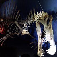 迫力の恐竜博2016。「ナイトミュージアム」に行ってきた!