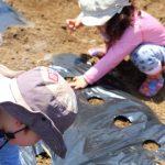 レインボーファミリー農園」で枝豆種まき体験