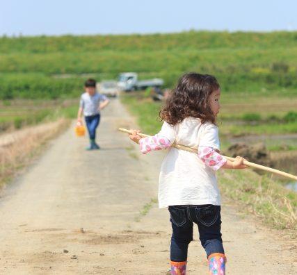 NPOさとやま「 夏の生きもの観察会2019」開催スケジュール。