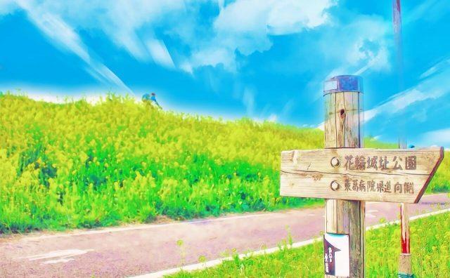 金色の野に降り立つべし。江戸川土手の菜の花が見頃を迎えています。