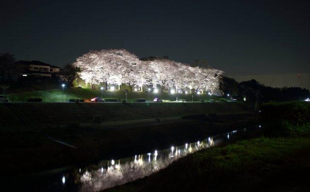 流山の「夜桜」を観にいってきました。