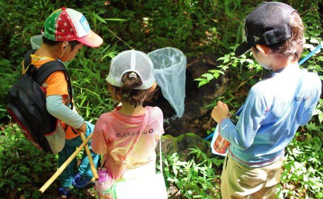 恵まれた里山環境 NPOさとやま主催「市野谷の森昆虫観察会」に参加。