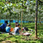 前川果樹園