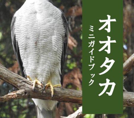 流山市の市の鳥は「オオタカ」に制定。