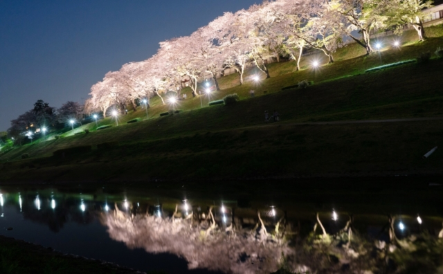 平成最後の流山のお花見。