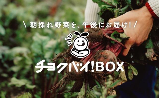 流山市近隣の朝採れ野菜を新聞店が届けてくれる「チョクバイ!BOX」。