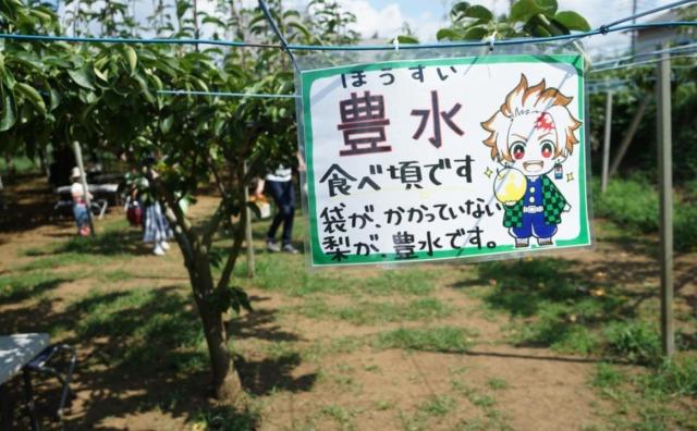 やっぱり梨が好き!鎌ヶ谷市「小川園」で梨狩り。